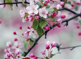 好看的粉色花朵粉色背景壁纸