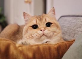 画眼线戴美瞳的大眼小猫图片