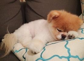 正在沙发上睡觉的可爱小狗狗