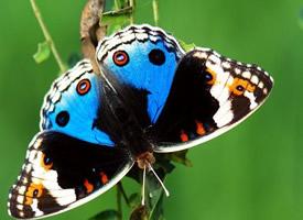 总要努力一下,就算破茧变不成蝴蝶
