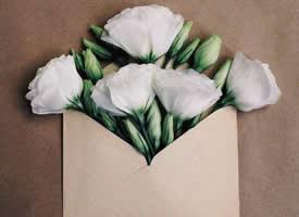 唯美创意的信封花朵壁纸欣赏