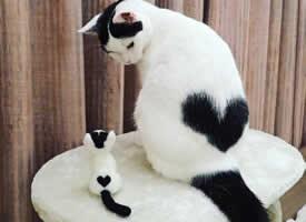 背上有桃心的特别猫猫图片欣赏