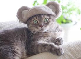 日本一猫主人积攒自家猫主子的毛,做