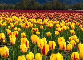 春天-万物复苏百花齐放的季节