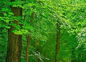 郁郁葱葱的茂盛树木绿色护眼壁纸