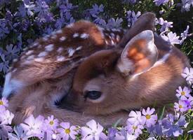 眼眸真好看的麋鹿图片欣赏