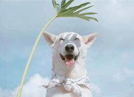 一只爱笑的可爱狗狗图片欣赏