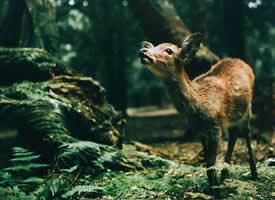 林深时见鹿,梦醒时见你