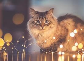 猫咪和灯关结合,拍出来的效果,太美了