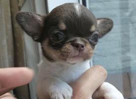 刚生出来的小奶狗真的是超级可爱
