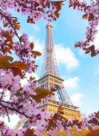 春天的巴黎 粉粉的梦幻美拍摄图片