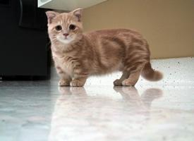 那些地盘低到可以碰地面的猫咪