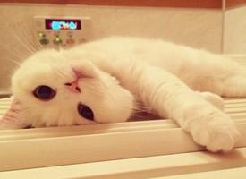 一只纯白色小猫顽皮搞怪的图片欣赏