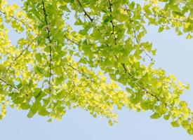 一组超唯美的小清新树叶绿色护眼壁纸