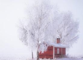 芬兰Lapua的雪景 美的不要不要的