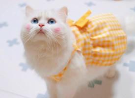 一组白色毛毛有着晒红的可爱小猫图片