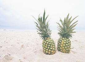 一组唯美系列菠萝图片欣赏
