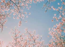 一组蓝色背景加上自然风光的唯美系壁纸参考