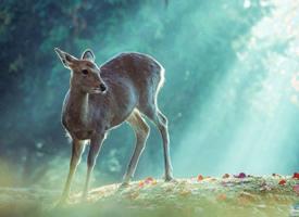 一组唯美梦幻系镜头下秋日的奈良小鹿