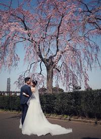 横滨东京京都樱花树下的婚纱照