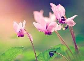 唯美清新的绽放的花朵微距摄影图片