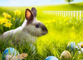 软萌可爱的灰色小兔子图片欣赏