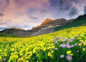 我最喜欢的一句话就是——走着走着,花就开了