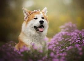 可爱宠物狗狗与植物的高清写真图片