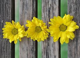 黄色鲜艳的小雏菊图片欣赏