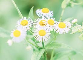 綠色小清新花卉植物唯美圖片壁紙