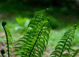 绿色蕨菜高清护眼壁纸欣赏