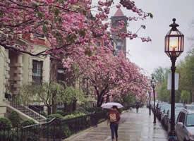 波士顿的春天街道拍摄图片欣赏