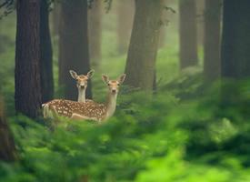 林间鹿——自由行走的树