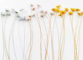 像花兒一樣,無論身在何處,不管周遭環境如何,都瀟灑綻放自己的美麗