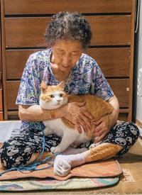乡下奶奶和猫咪的日常生活拍摄图片