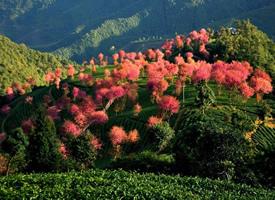 一组特别仙的山中美景图片欣赏