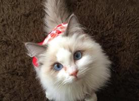 眼神超级惹人怜爱的小猫咪图片欣赏