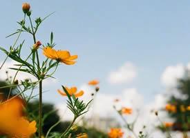 一组超级好看开的灿烂的雏菊图片
