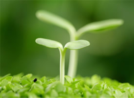 清新綠色護眼嫩芽高清桌面壁紙