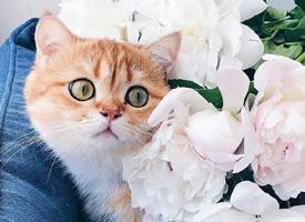 一组可爱猫猫在花丛中的唯美图片欣赏