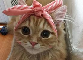 这只猫咪头上绑了一个蝴蝶结,一下子变成了萌少女