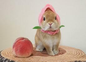 一組超級萌的小兔兔來襲
