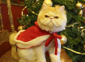 冬季雪中动物可爱汪星人小猫雪地唯美图片