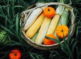 一组超有意境的蔬菜拍摄图片欣赏