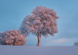 堆满树枝的白雪图片_10张
