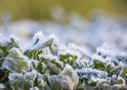 植物冰挂现象图片_11张