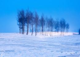 冰天雪地的自然風景圖片_9張