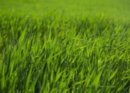 夏季绿色的草地图片_14张