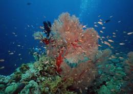 珊瑚海水底风景图片_10张