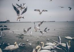 海邊的風景圖片_10張